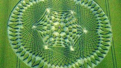 Crop Circles - Circulos en las cosechas