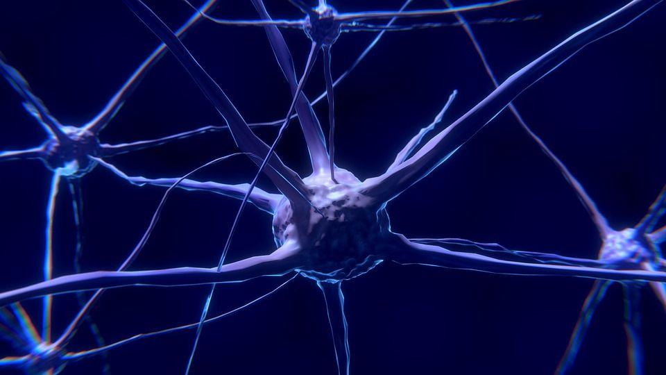 Conexión cuántica entre el universo y el cerebro