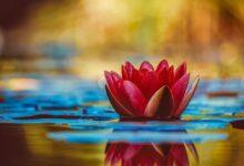 Refranes y proverbios Zen