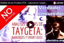 Análisis de las Pruebas PCR - Laboratorio Taygeta